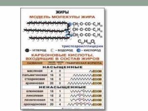 Сравниваем сложные и простые углеводы   Важные отличия