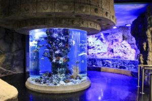 4 лучших океанариума Москвы