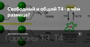 Свободный, связанный и общий Т4 — в чем разница?