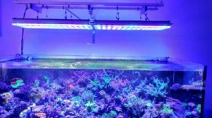 7 лучших ламп для аквариума