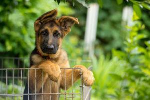 16 лучших собак для квартиры