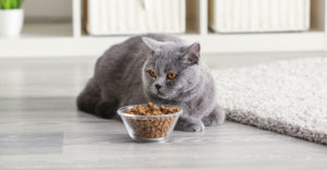 8 лучших кормов для шотландских кошек