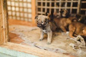 6 лучших приютов для собак в Москве