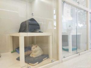 12 лучших гостиниц для животных в Москве