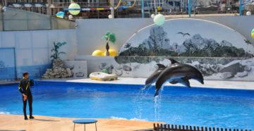 9 лучших дельфинариев Крыма
