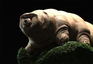 13 самых медленных существ планеты