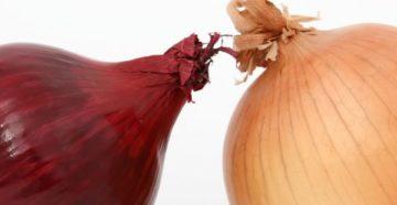 Сравниваем белый и красный лук | Важные отличия
