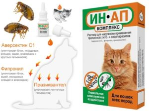 6 лучших капель от блох для кошек